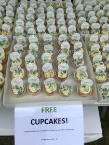 Branded Debenhams Ottaway cupcakes